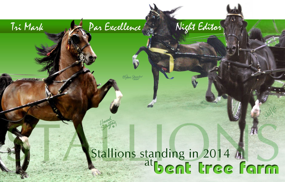 Stallions standing at Bent Tree Farm